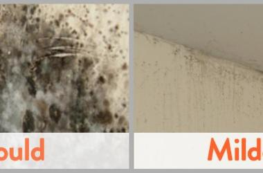 Mildew and Mould